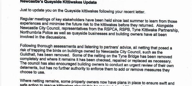 Newcastle Quayside Kittiwakes update